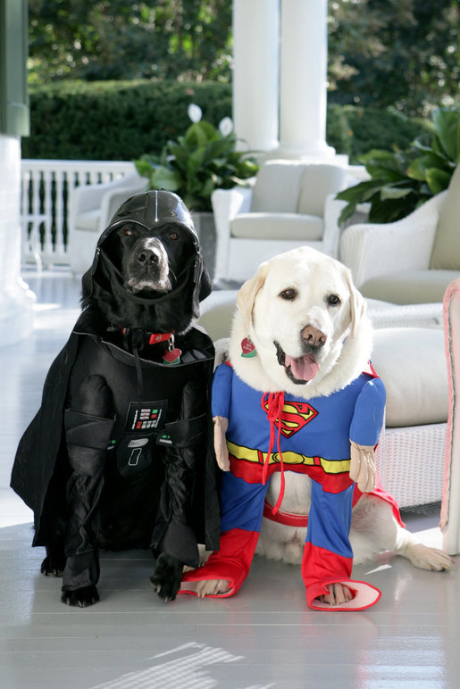 Jackson, left, and Dave, right, dressed for Hallowe'en in 2007. If you're wondering who is the dick who dressed them like this, it is the one and only Dick Cheney.